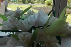 Белые цветы в Парусе