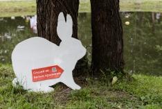 Куда привел Белый кролик?